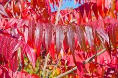 Fall& x27; деревья s красочные Стоковые Изображения