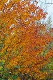 Fall& x27; деревья s красочные Стоковые Изображения RF