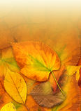 Fall. Autumn leaf fall. Background, digital art stock illustration