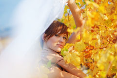 Fall Royalty Free Stock Photos