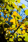 Fall. Leaves composition in a autumn background Royalty Free Stock Photography