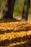 Fall. Leaves composition in a autumn bachgraound Stock Photo