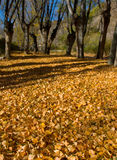 Fall. Leaves composition in a autumn bachgraound Royalty Free Stock Photography