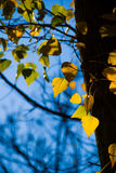 Fall. Leaves antd tree in a fall background Stock Photo