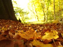 fall Royaltyfri Foto