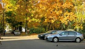 fall royaltyfria foton