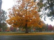 Fall stockfoto