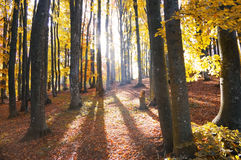 Fall. Autumn in the deep wood Stock Images