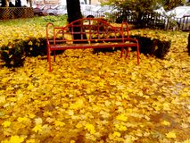 fall royaltyfri fotografi
