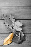Fall. Autumn leaves with selective coloring Royalty Free Stock Images