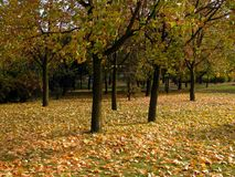 Fall. Autumn in park Royalty Free Stock Photo