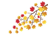 Fall. Illustration of a tree branch in fall Royalty Free Stock Photos