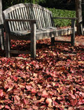 Into Fall. Fall Leaves against weatherd bench Stock Photography