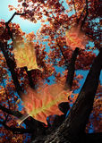 During The Fall A. Dynamic close-up of leaves falling from tree and sky in background Royalty Free Stock Photo