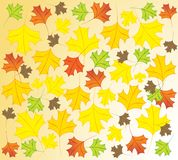 The_fall Royalty Free Stock Photography