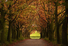 Fall. Coloured trees beside the avenue Stock Photo
