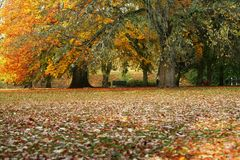 Fall. Of leaves in a beautifal park in sweden Stock Image