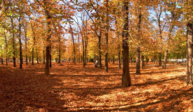 Fall. Panoramic picture of park in Paris at fall time Stock Photography
