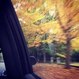fall Royaltyfria Bilder