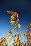 Fall. Leaf on the wind, blue sky Stock Photography