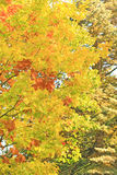 Fall. Colors of the october foliage Royalty Free Stock Images