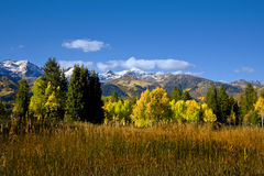 Fall. Colors on a high mountain meadow with blue sky and clouds Stock Images