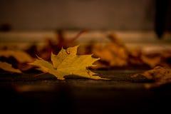 fall Arkivfoto