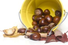 Fall. Chestnuts spilling out from a yellow bucket stock photo
