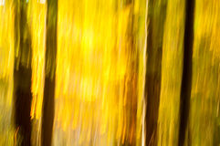 Fall abstract Stock Photography