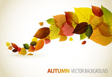 Fall abstract floral background Stock Image