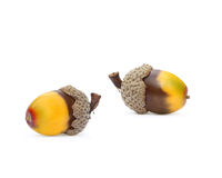Fall Acorns Royalty Free Stock Photo