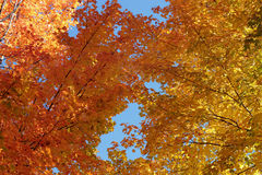 Fall against the sky Royalty Free Stock Image