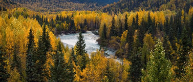 Fall in Alaska Royalty Free Stock Photos