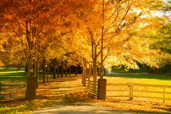 Fall alley. Fall scene: an alley lined with changing trees Royalty Free Stock Photo
