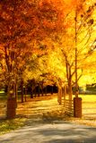 Fall alley. Fall scene: an alley lined with changing trees Stock Photography