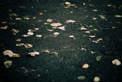 Fall alley background Stock Photography