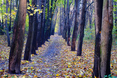 Fall alley Royalty Free Stock Images