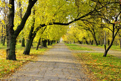 Fall alley in park. Yellow alley in authumn park Stock Photography