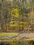 Fall Along the River. Fall along the Looking Glass River, Michigan, USA. High resolution and detail, 14MP camera Royalty Free Stock Photo
