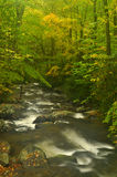 Fall along a white water stream in the Great Smoky Mountains. Stock Image