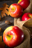 Fall Apples Stock Images