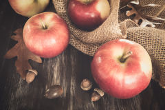 Fall Apples Royalty Free Stock Image