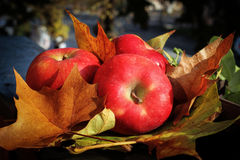 Fall apples Stock Photo