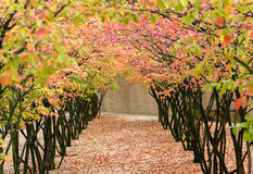 Fall Arches Stock Images