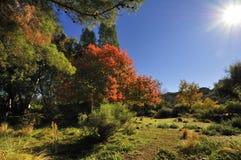 Fall in Arizona Stockfotografie