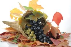 Fall arrangement Stock Image