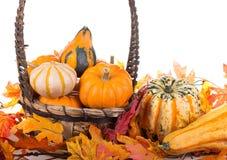 Fall Arrangement Stock Photos
