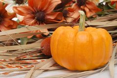 Fall Arrangment. Pumpkin fall arrangement with flowers Stock Images