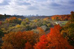 Fall arrives Toronto. Bright fall foliage with Toronto skyline in the background Stock Photos