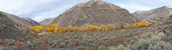 Fall Aspen Panorama Stock Images